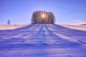 sun rising behind copse of trees on snowy field
